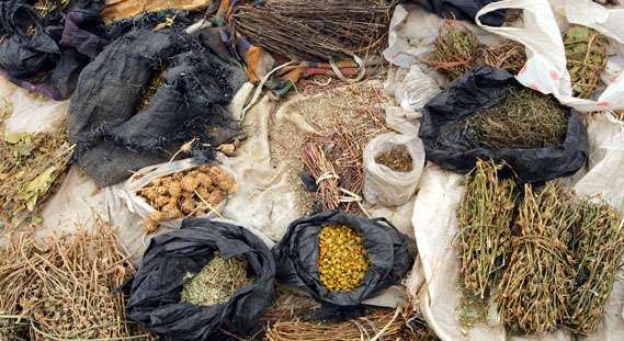 traditional-medicine-herbs