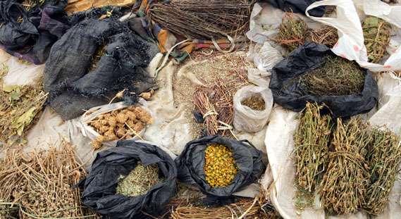traditional-medicine-herbs